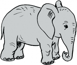 Elephant Clip Art Outline Black And White Elephant 1 Elephant ...