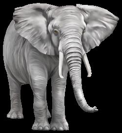 Elephant Large PNG Clipart - Best WEB Clipart