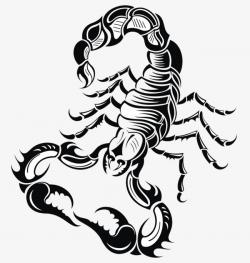 Fold Big Black Scorpion Buckle Clip Free Hd, Scorpio, Zodiac ...