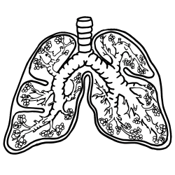 lungs-clipart | Bodies | Pinterest | Lungs