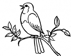 Bird Black And White Drawing at GetDrawings.com | Free for personal ...