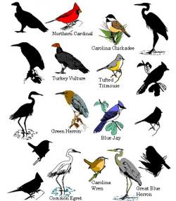 7 best BIRDS LIST NAMES images on Pinterest | Bird watching, Animais ...