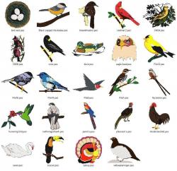Birds | Bird and Animal