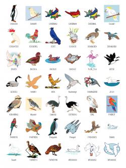 Bird clipart name - Pencil and in color bird clipart name