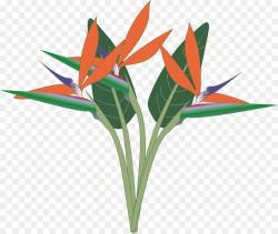Bird-of-paradise Bird of paradise flower Clip art - lobster png ...