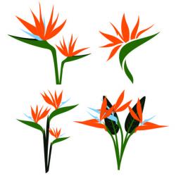Birds of Paradise SVG Cuttable Design Cut File. Vector, Clipart ...