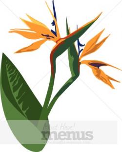Birds of Paradise Clipart | Caribbean Clipart