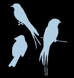Image - 9905d142b5eef585fa2884c4a7118c74 blue-silhouette-birds-look ...