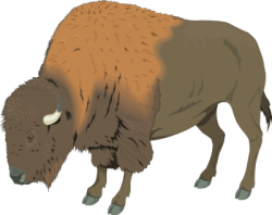 Free Bison Clipart, 1 page of Public Domain Clip Art
