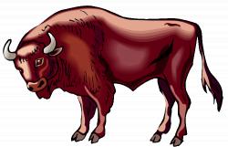 Free Buffalo Clipart