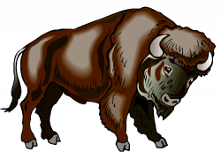 Buffalo Bison Clipart
