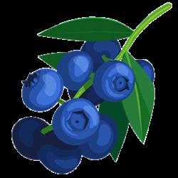 Blueberries | Paradise Bay Wikia | FANDOM powered by Wikia