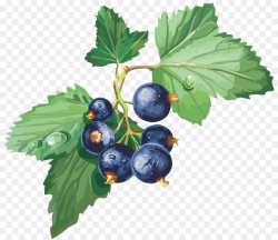 Blackcurrant Gooseberry Redcurrant Jostaberry Clip art - blueberries ...