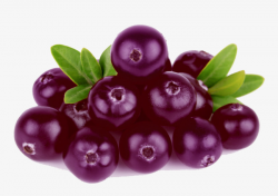A pile of blueberries, Blueberry, Fruit, In Kind PNG Image and ...