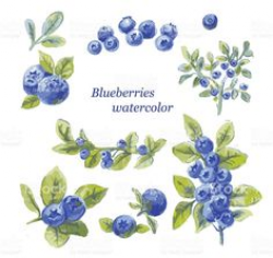 Background of a branch with blueberries. Seamless pattern ...