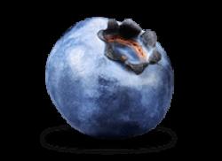 Single Blueberry transparent PNG - StickPNG