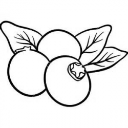 Blueberry clipart black and white - Pencil and in color blueberry ...