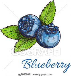 Vector Clipart - Blueberry fruits with leaves isolated sketch ...
