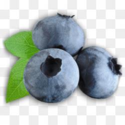 Blue raspberry flavor Clip art - blueberry png download - 2399*1414 ...