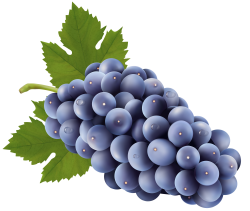 28+ Collection of Grape Clipart Transparent | High quality, free ...