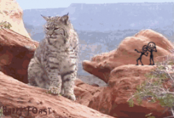Bobcat GIF - Find & Share on GIPHY