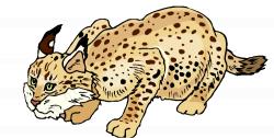 Bobcat Articles