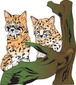 Baby bobcats visit Iowa hunter in his tree stand. | KUQL Oldies