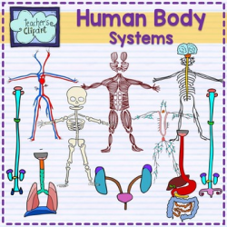 Human Body systems clipart BUNDLE {Science clip art} by Teacher's ...