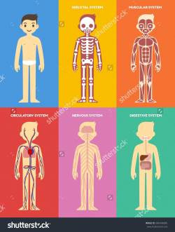 Body System In Human