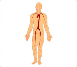Free Human Body Clipart, Download Free Clip Art, Free Clip ...
