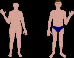 Human Body Clip Art at Clker.com - vector clip art online, royalty ...