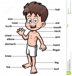 28+ Collection of Body Parts Clipart | High quality, free cliparts ...