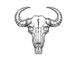 Skull Animal Head Bull Cow Bone Dead Skeleton Nature Death Wild ...