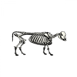 Cow Skeleton clipart, cliparts of Cow Skeleton free download (wmf ...