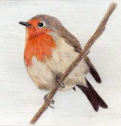 45 best Tattoo/robin images on Pinterest   European robin, Robins ...