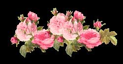 Vintage Pink | free vintage rose borders – vintage roses ...