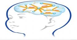 Stress affect Brain Development in Children - Assignment Point