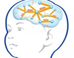 baby brain development - Incep.imagine-ex.co