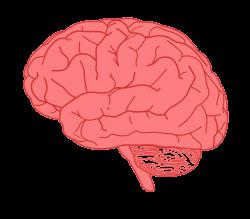 Clipart - brain in profile