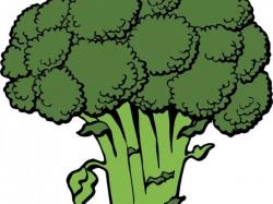 Broccoli Clipart - Free Clipart on Dumielauxepices.net