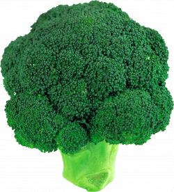 Broccoli / Image ID: 1026 | PNG Photo with Transparent Background
