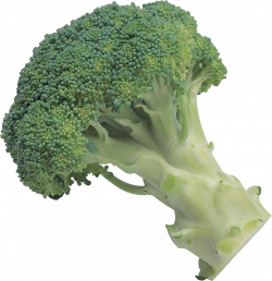 Broccoli PNG | Web Icons PNG