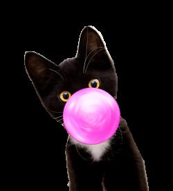 Bubble Gum Kitten