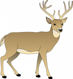Free Image on Pixabay - Deer, Male, Animal, Mammal, Antlers | Winter ...