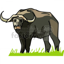 Royalty-Free African water buffalo standing in grassy field 129630 ...