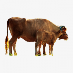 Cattle, Buffalo, Cattle Clipart PNG Image and Clipart for Free Download