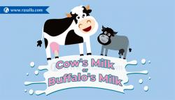 Cow's Milk or Buffalo's Milk which is better?   Rasalla