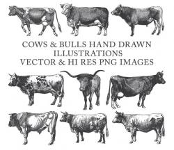 Cow Clipart, Bull Clipart, Farm Clipart, Hand Drawn Engraving Cow ...