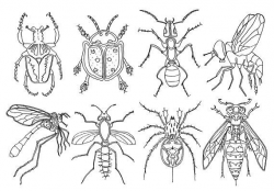 Bugs Clipart, Insects Clipart, Bugs Pen Drawing, Summer ...