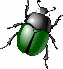 Bugs PNG images free pictures, bug PNG